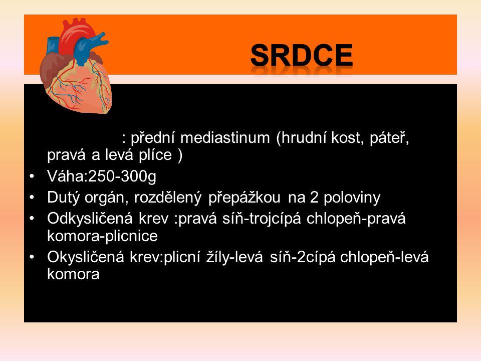 Srdce Uložení : přední mediastinum (hrudní kost, páteř, pravá a levá plíce ) Váha:250-300g. Dutý orgán, rozdělený přepážkou na 2 poloviny.