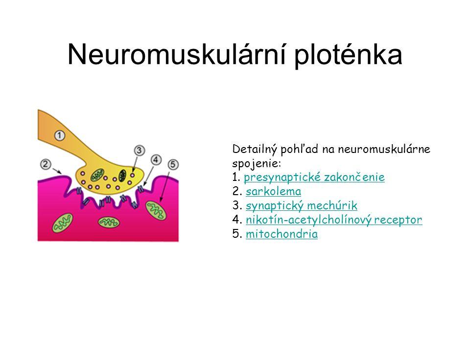 Neuromuskulární ploténka