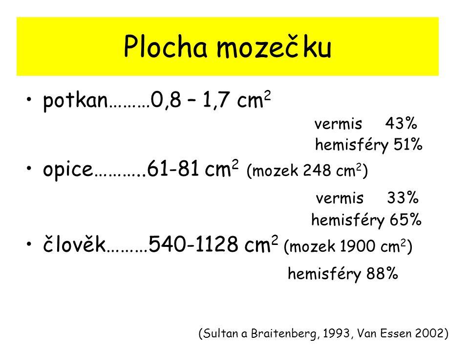 Plocha mozečku potkan………0,8 – 1,7 cm2