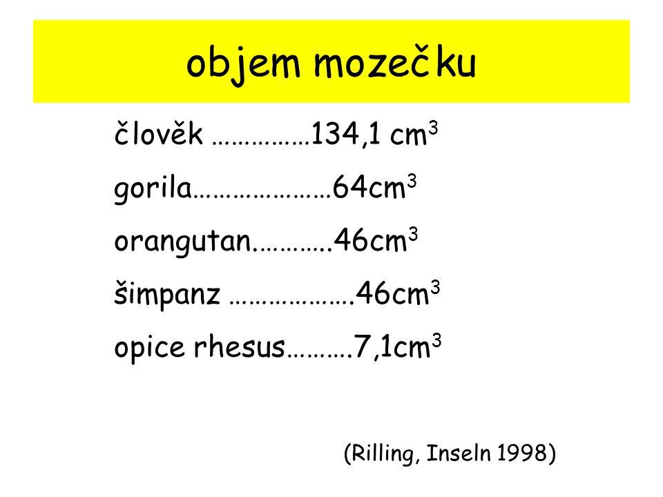 objem mozečku člověk ……………134,1 cm3 gorila…………………64cm3