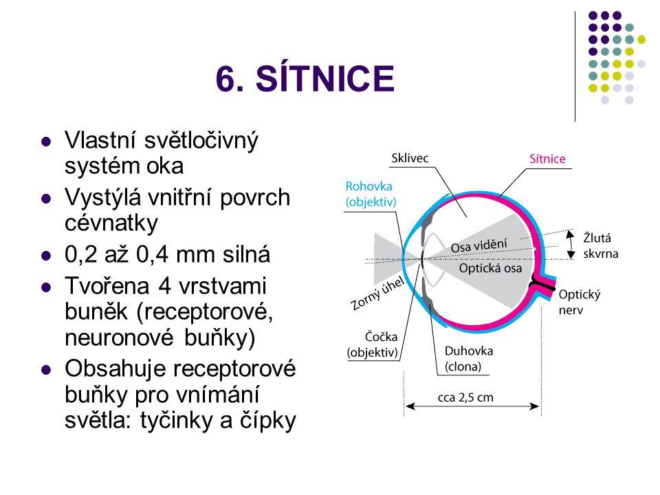 6. SÍTNICE Vlastní světločivný systém oka