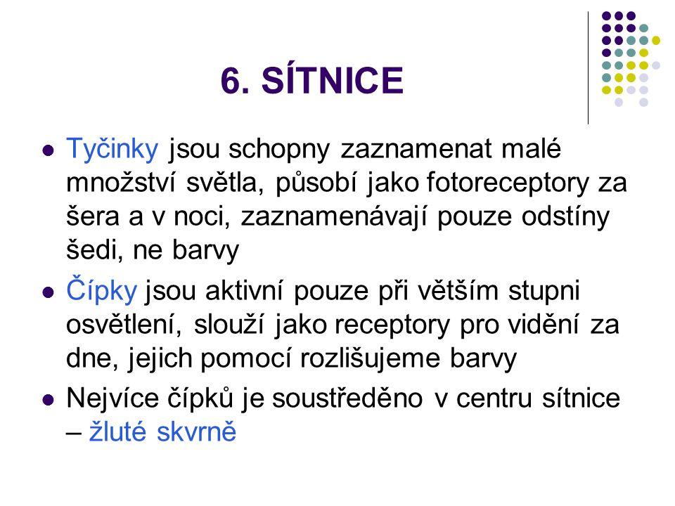 6. SÍTNICE
