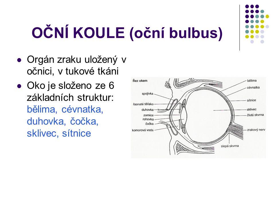 OČNÍ KOULE (oční bulbus)