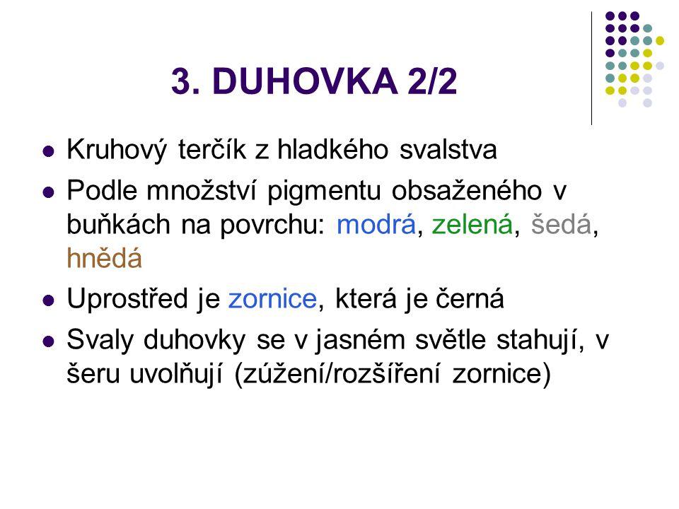 3. DUHOVKA 2/2 Kruhový terčík z hladkého svalstva