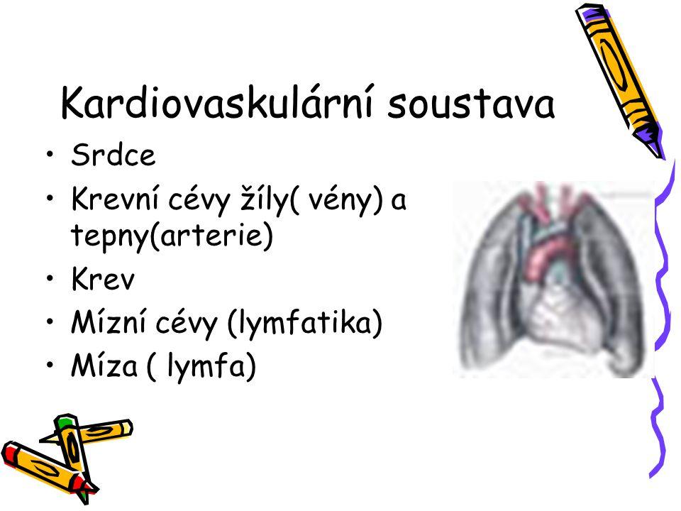 Kardiovaskulární soustava
