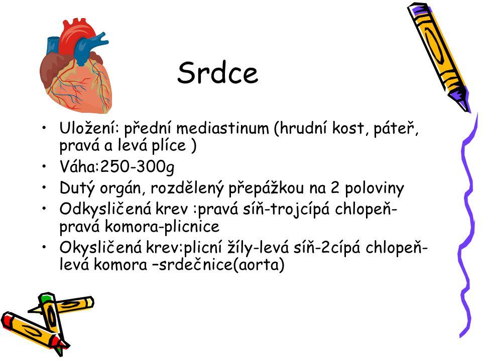 Srdce Uložení: přední mediastinum (hrudní kost, páteř, pravá a levá plíce ) Váha:250-300g. Dutý orgán, rozdělený přepážkou na 2 poloviny.