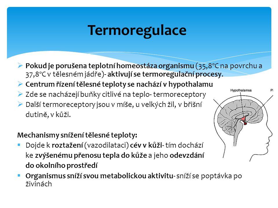 Termoregulace Pokud je porušena teplotní homeostáza organismu (35,8ºC na povrchu a 37,8ºC v tělesném jádře)- aktivují se termoregulační procesy.
