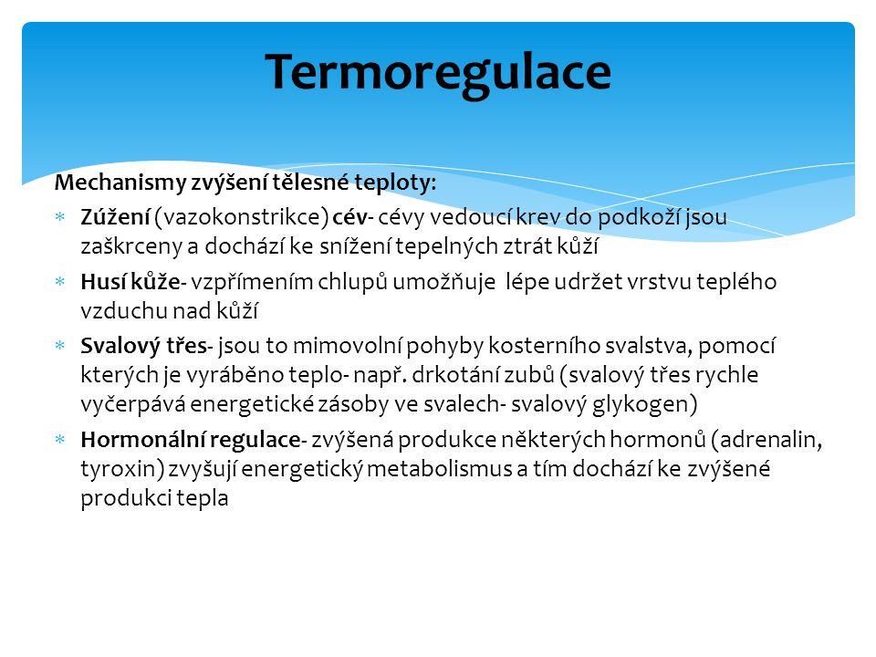 Termoregulace Mechanismy zvýšení tělesné teploty: