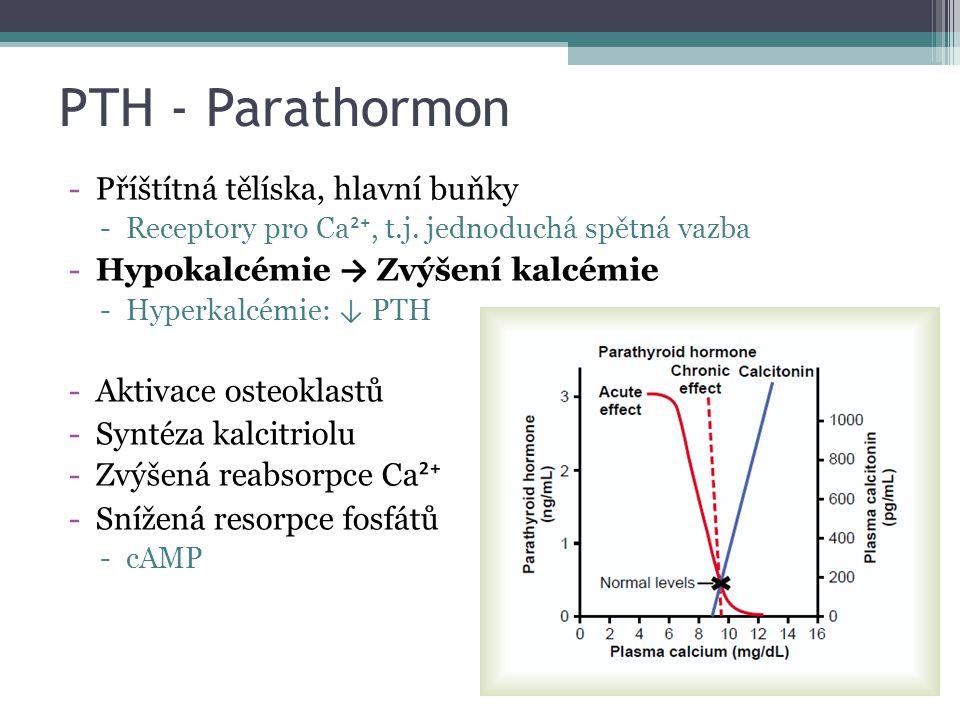 PTH - Parathormon Příštítná tělíska, hlavní buňky