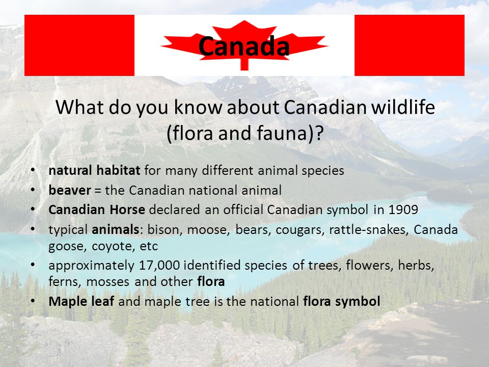 What do you know about Canadian wildlife (flora and fauna)