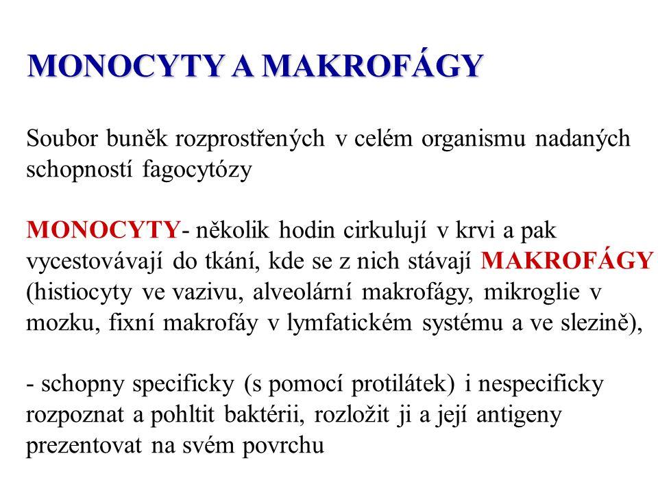 MONOCYTY A MAKROFÁGY Soubor buněk rozprostřených v celém organismu nadaných schopností fagocytózy.