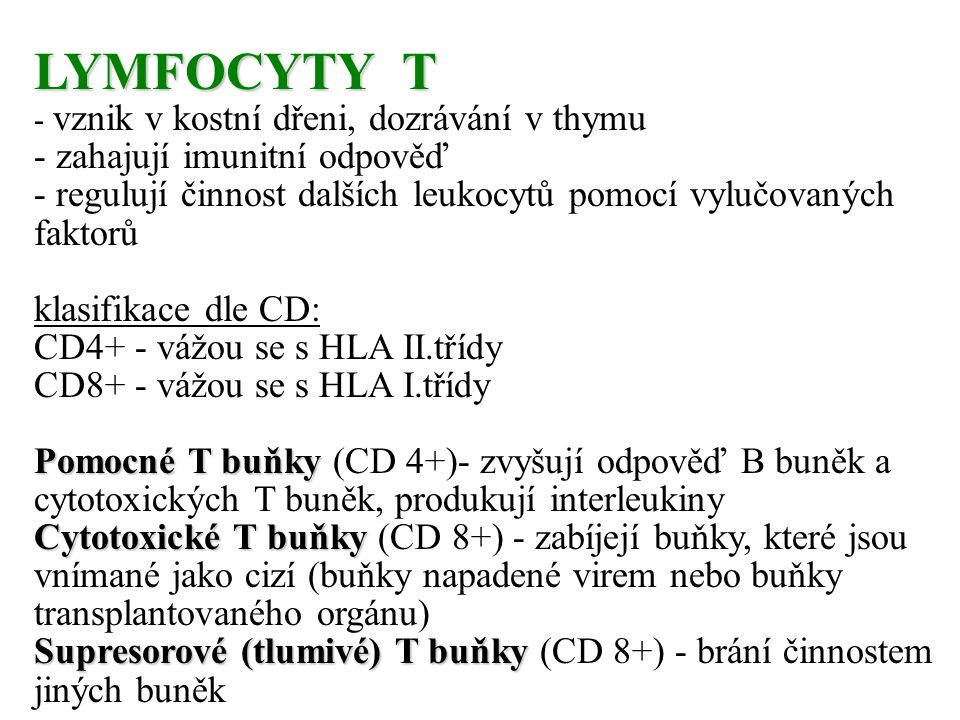 LYMFOCYTY T - zahajují imunitní odpověď