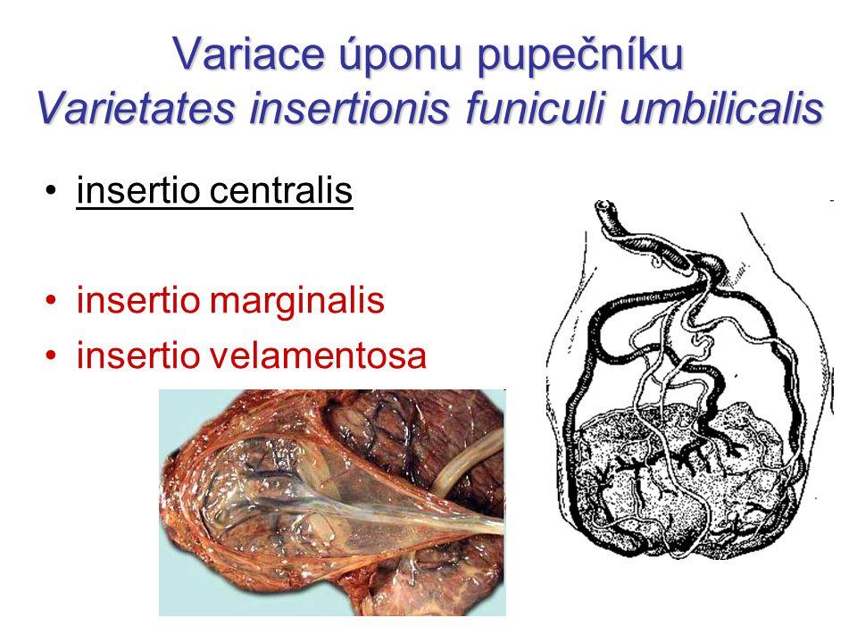 Variace úponu pupečníku Varietates insertionis funiculi umbilicalis