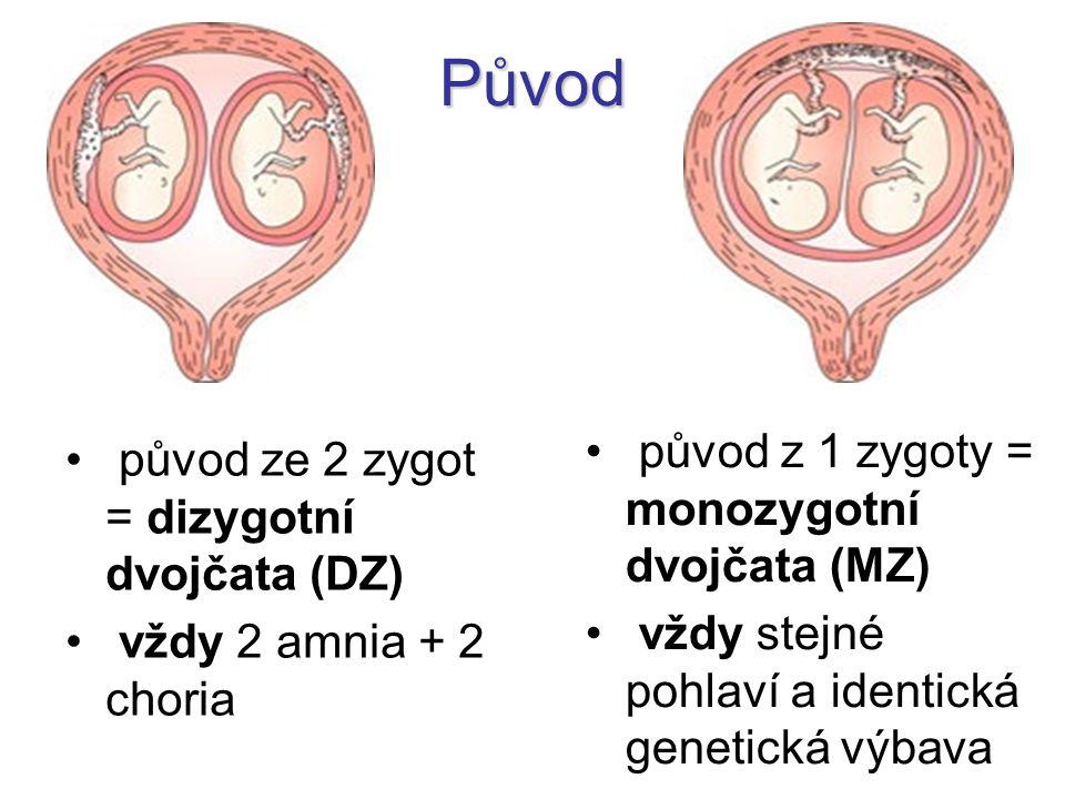 Původ původ z 1 zygoty = monozygotní dvojčata (MZ)