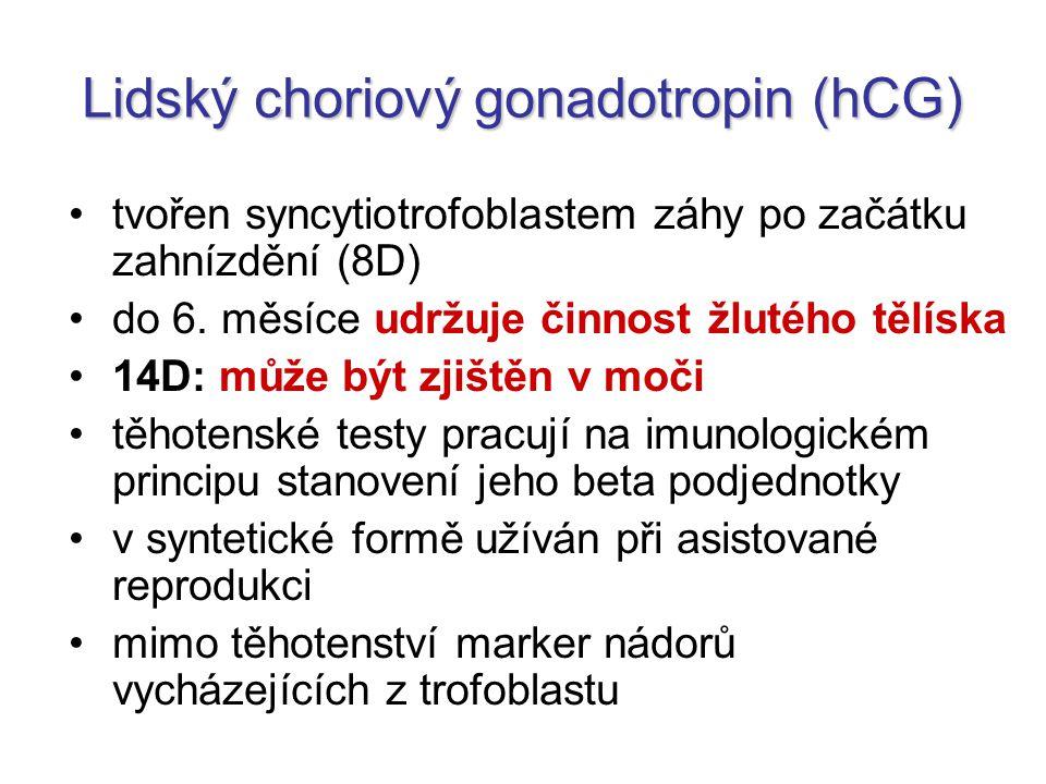 Lidský choriový gonadotropin (hCG)