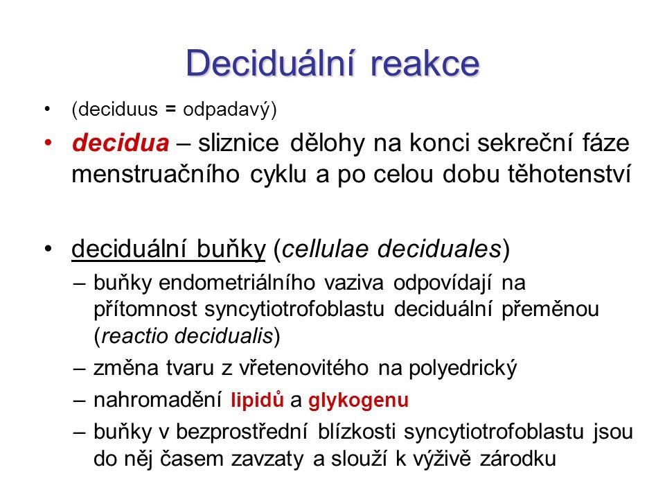 Deciduální reakce (deciduus = odpadavý) decidua – sliznice dělohy na konci sekreční fáze menstruačního cyklu a po celou dobu těhotenství.