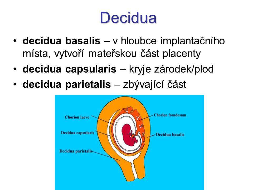Decidua decidua basalis – v hloubce implantačního místa, vytvoří mateřskou část placenty. decidua capsularis – kryje zárodek/plod.