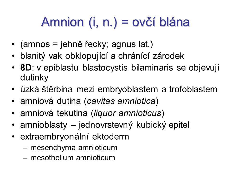 Amnion (i, n.) = ovčí blána