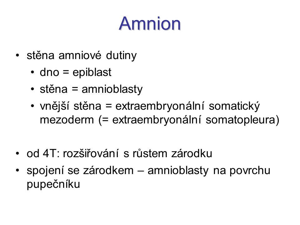 Amnion stěna amniové dutiny dno = epiblast stěna = amnioblasty