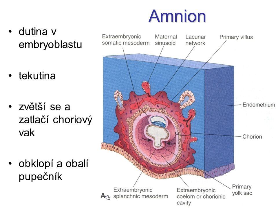 Amnion dutina v embryoblastu tekutina zvětší se a zatlačí choriový vak