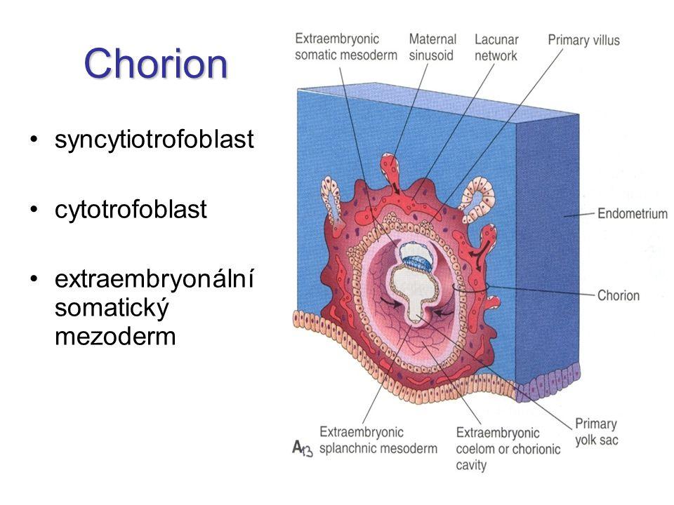 Chorion syncytiotrofoblast cytotrofoblast
