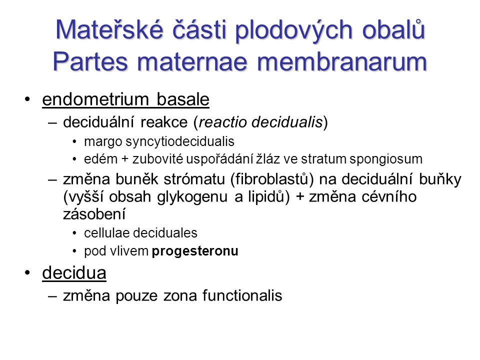Mateřské části plodových obalů Partes maternae membranarum