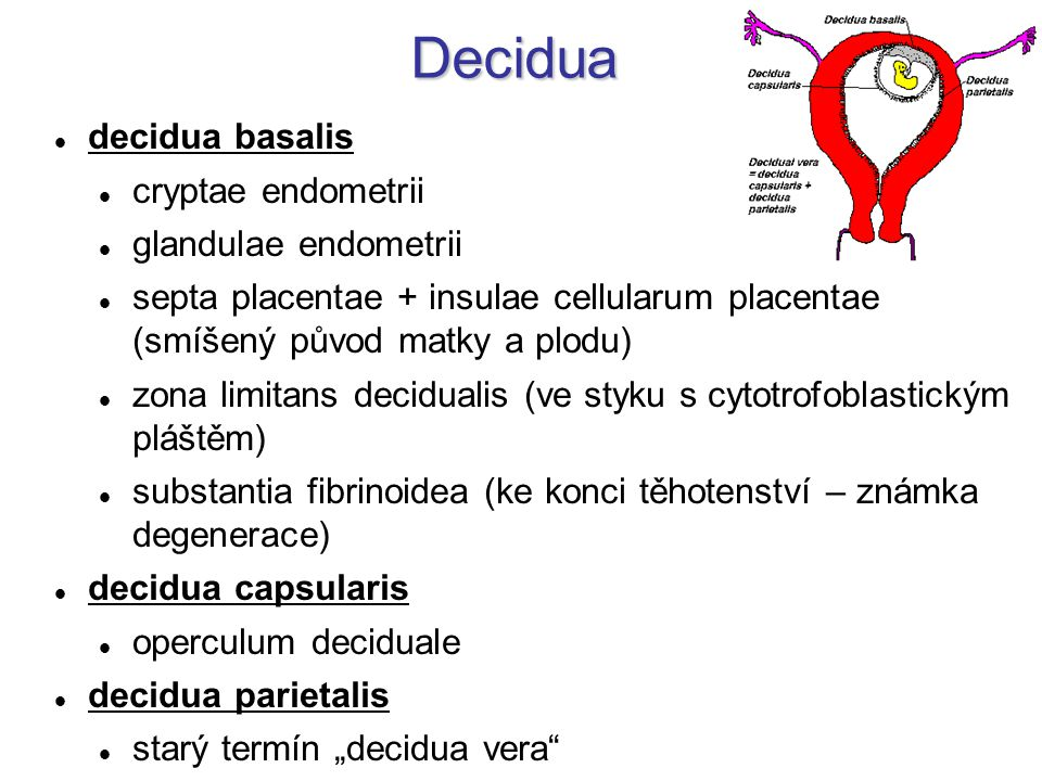 Decidua decidua basalis cryptae endometrii glandulae endometrii
