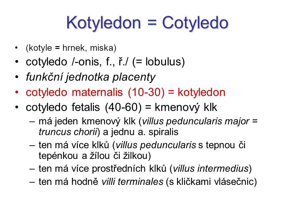 Kotyledon = Cotyledo cotyledo /-onis, f., ř./ (= lobulus)