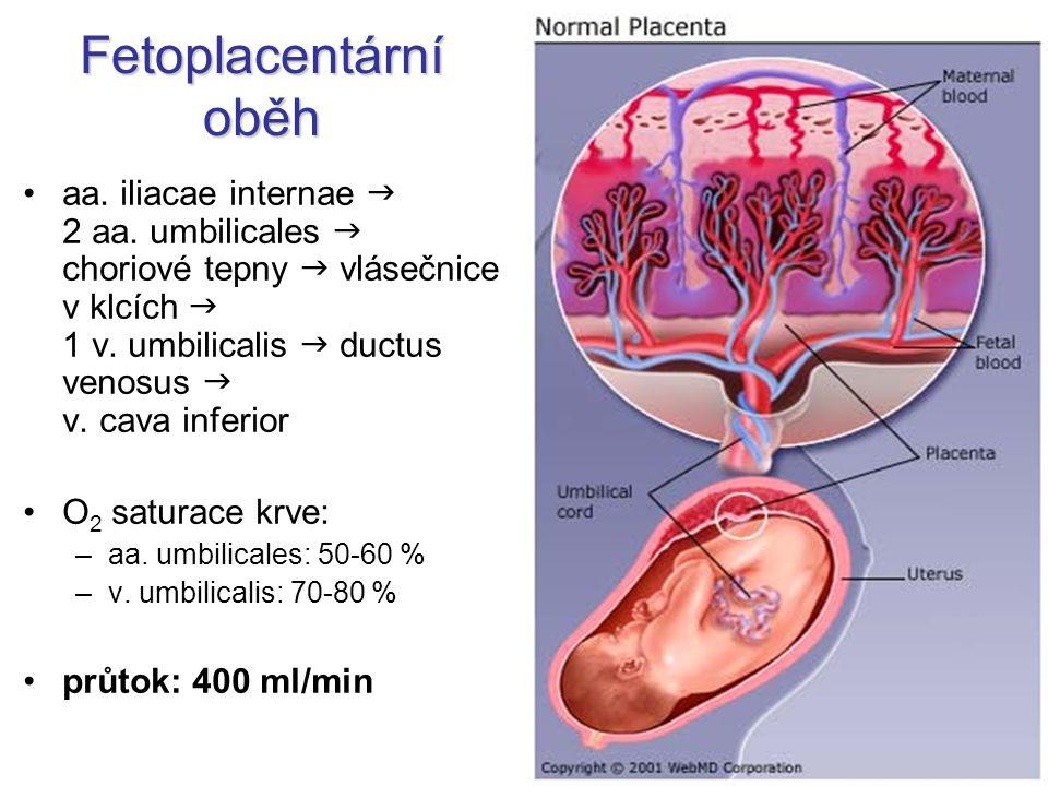 Fetoplacentární oběh