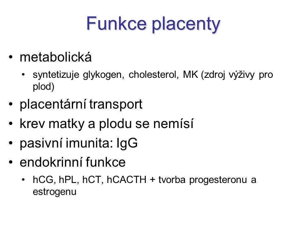 Funkce placenty metabolická placentární transport
