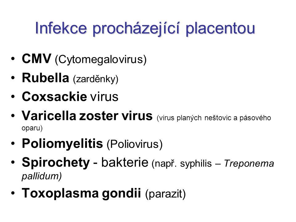 Infekce procházející placentou