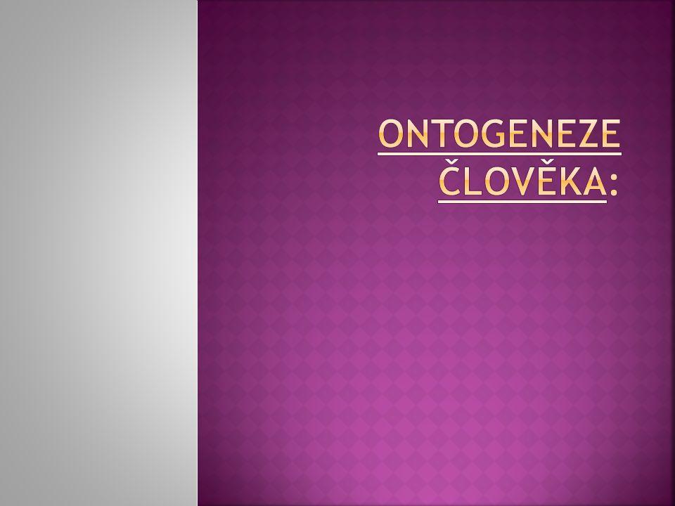 ontogeneze člověka: