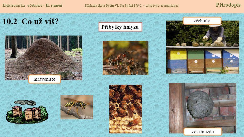 10.2 Co už víš Příbytky hmyzu včelí úly mraveniště vosí hnízdo