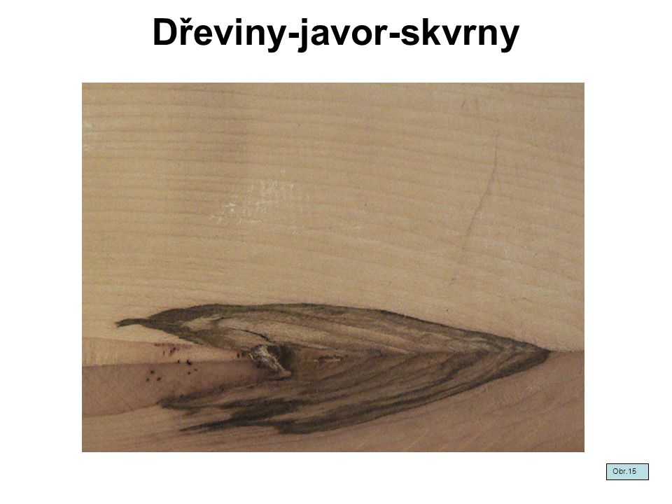 Dřeviny-javor-skvrny
