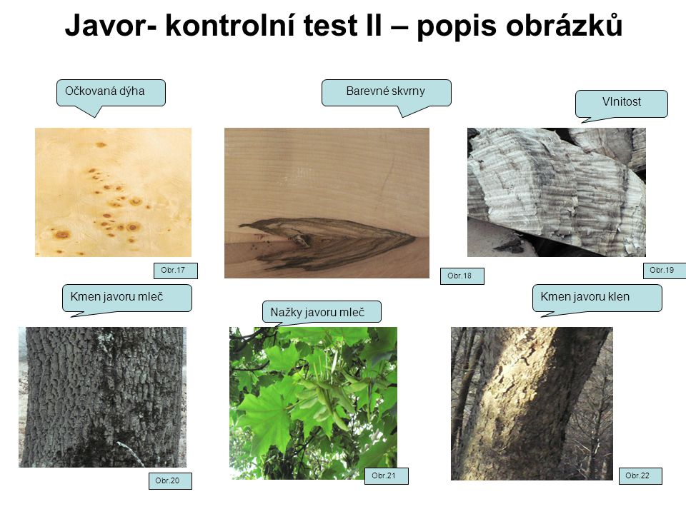 Javor- kontrolní test II – popis obrázků