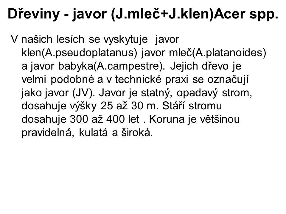 Dřeviny - javor (J.mleč+J.klen)Acer spp.