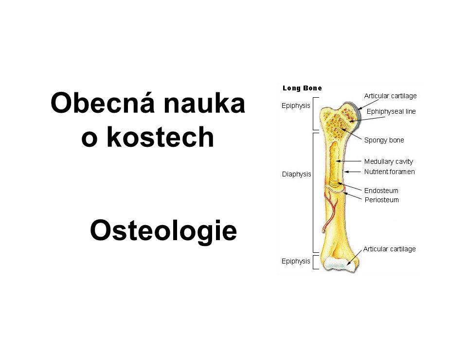 Obecná nauka o kostech Osteologie