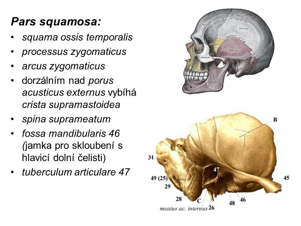 Pars squamosa: squama ossis temporalis processus zygomaticus
