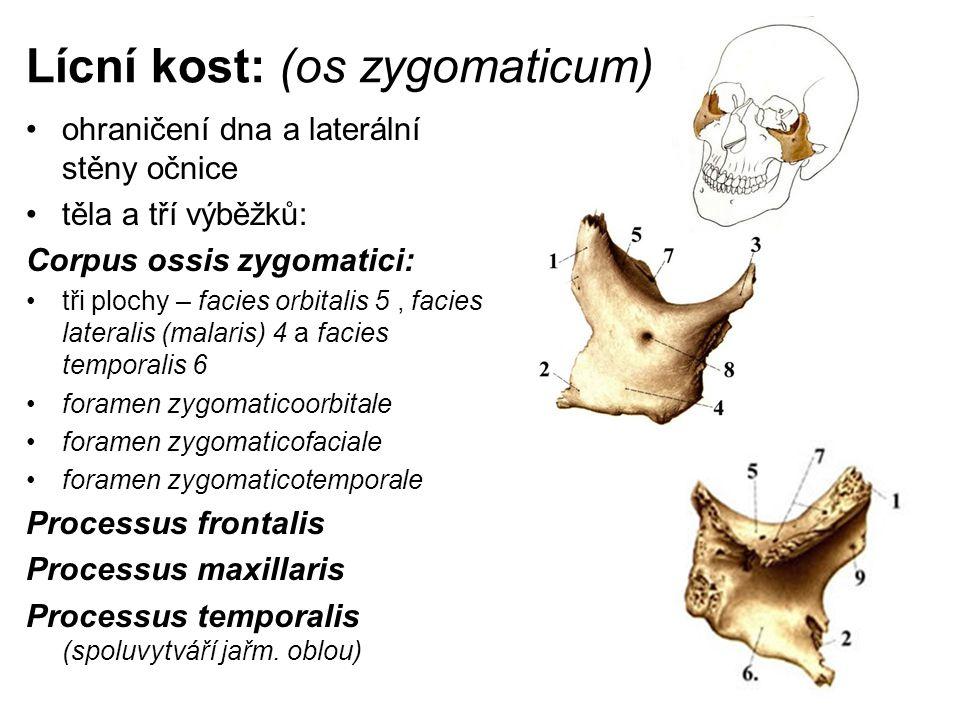 Lícní kost: (os zygomaticum)
