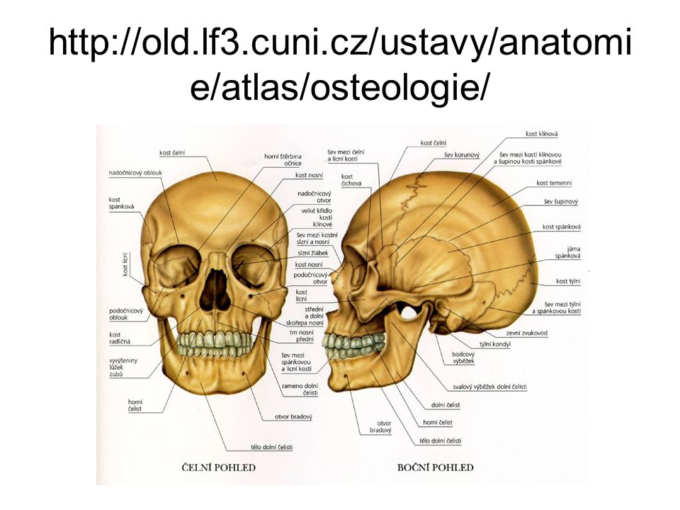 http://old.lf3.cuni.cz/ustavy/anatomie/atlas/osteologie/