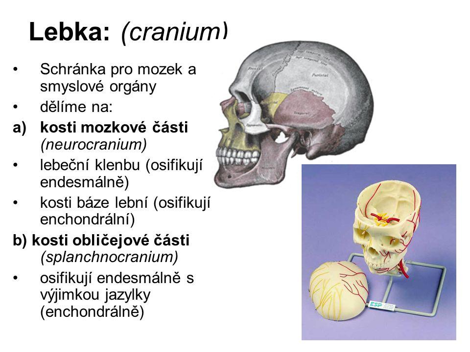 Lebka: (cranium) Schránka pro mozek a smyslové orgány dělíme na: