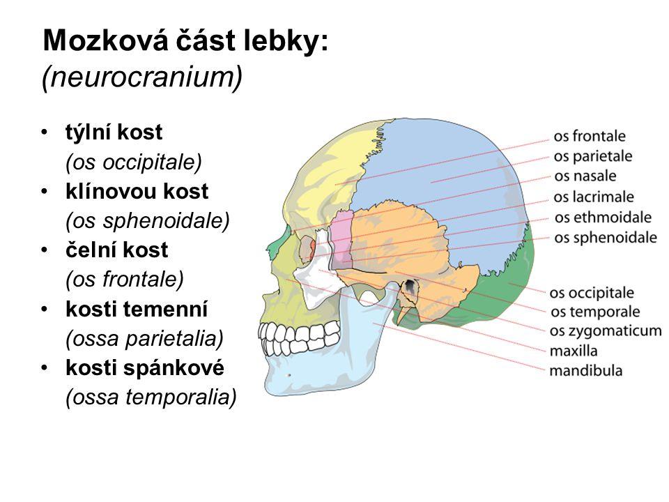 Mozková část lebky: (neurocranium)