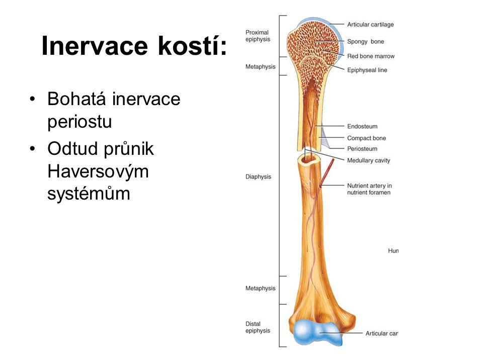 Inervace kostí: Bohatá inervace periostu