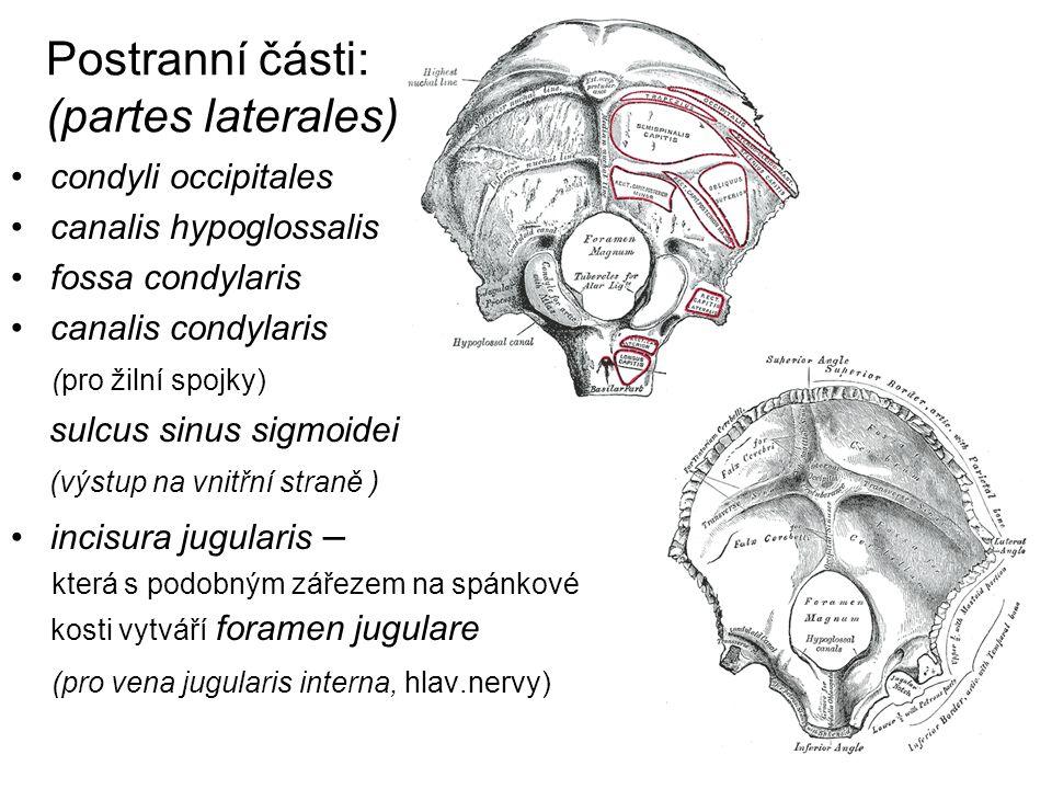 Postranní části: (partes laterales)