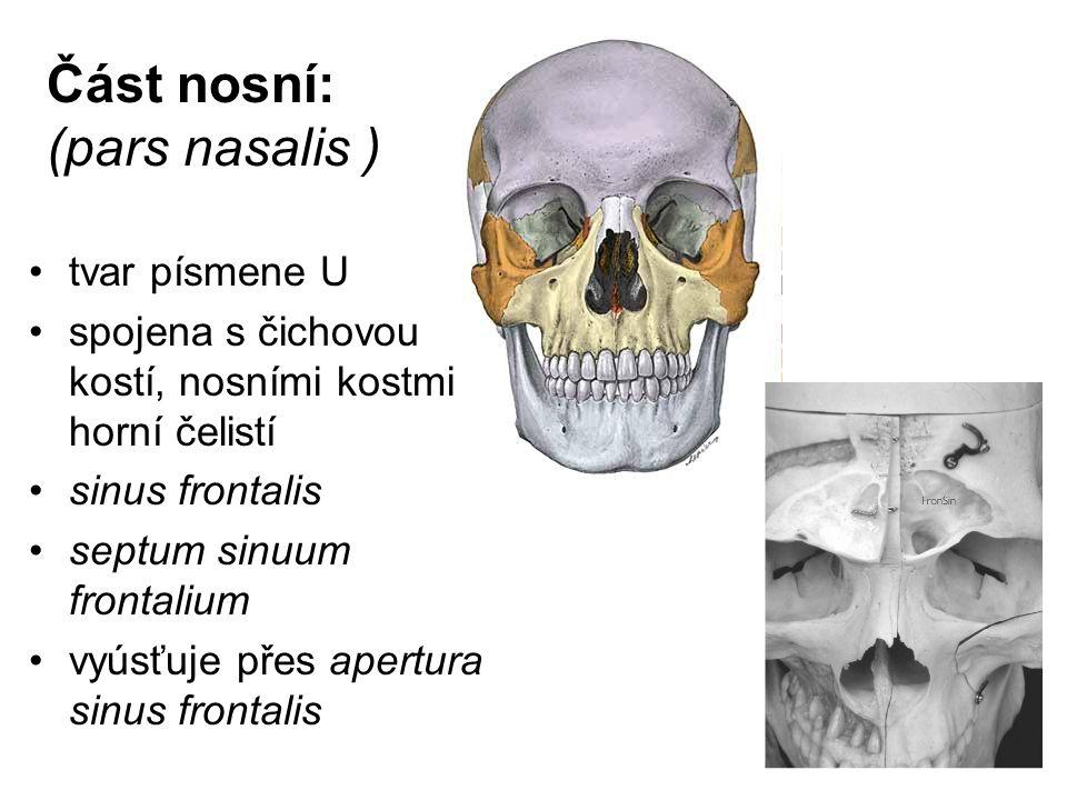 Část nosní: (pars nasalis )
