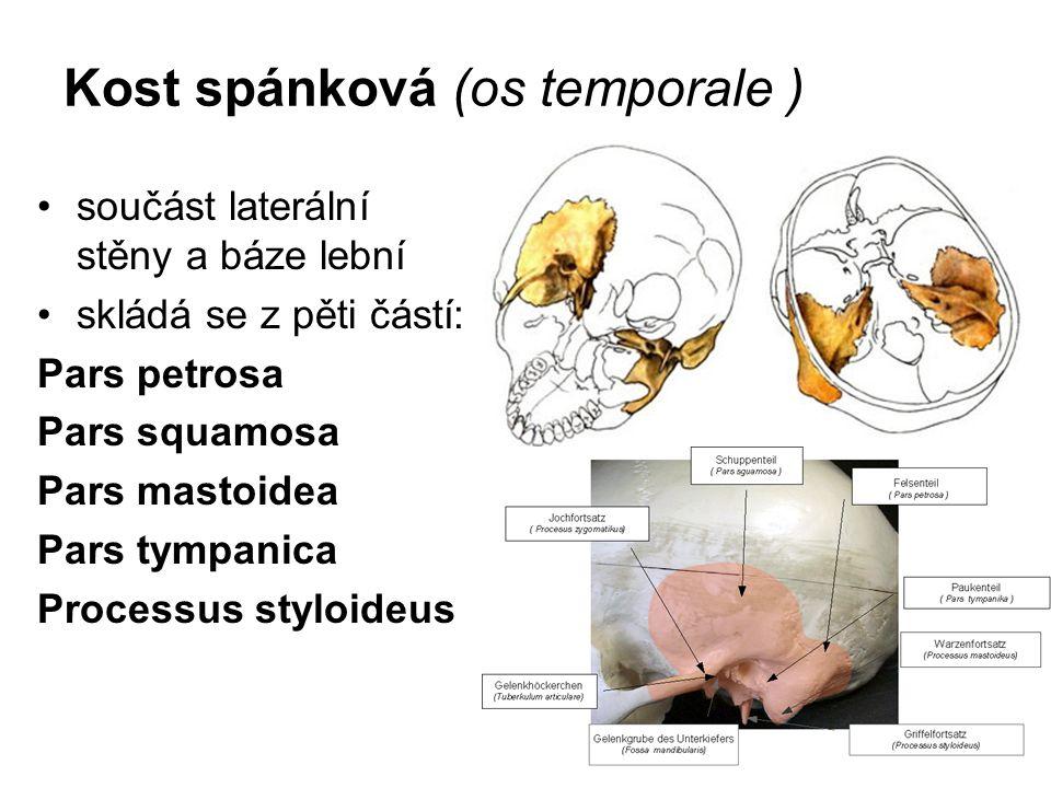 Kost spánková (os temporale )