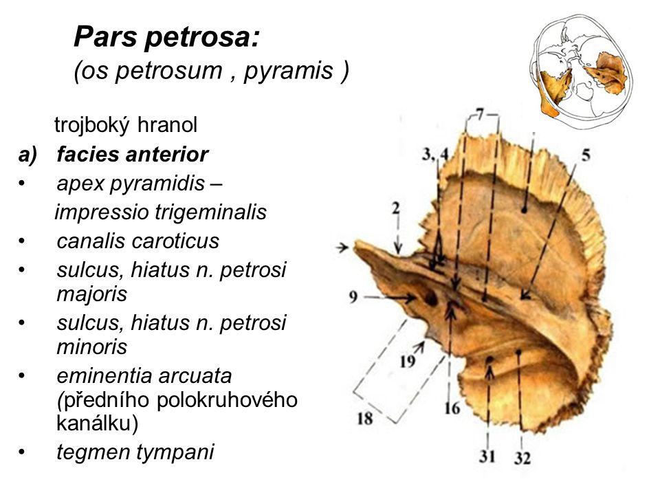 Pars petrosa: (os petrosum , pyramis )