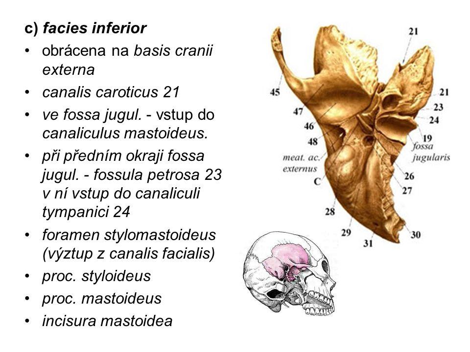 c) facies inferior obrácena na basis cranii externa. canalis caroticus 21. ve fossa jugul. - vstup do canaliculus mastoideus.