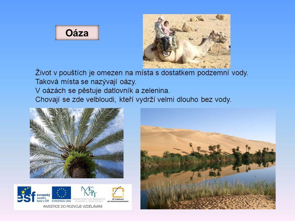 Oáza Život v pouštích je omezen na místa s dostatkem podzemní vody.
