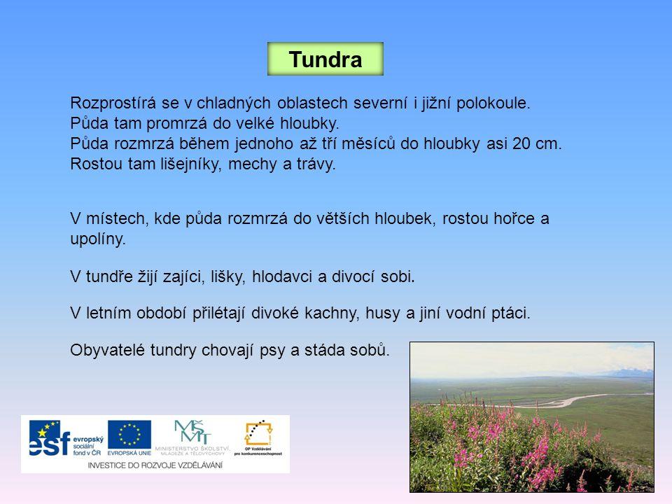 Tundra Rozprostírá se v chladných oblastech severní i jižní polokoule.